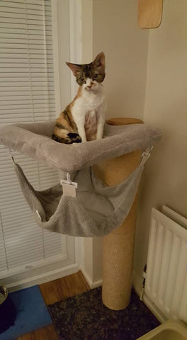cat tower with bedding