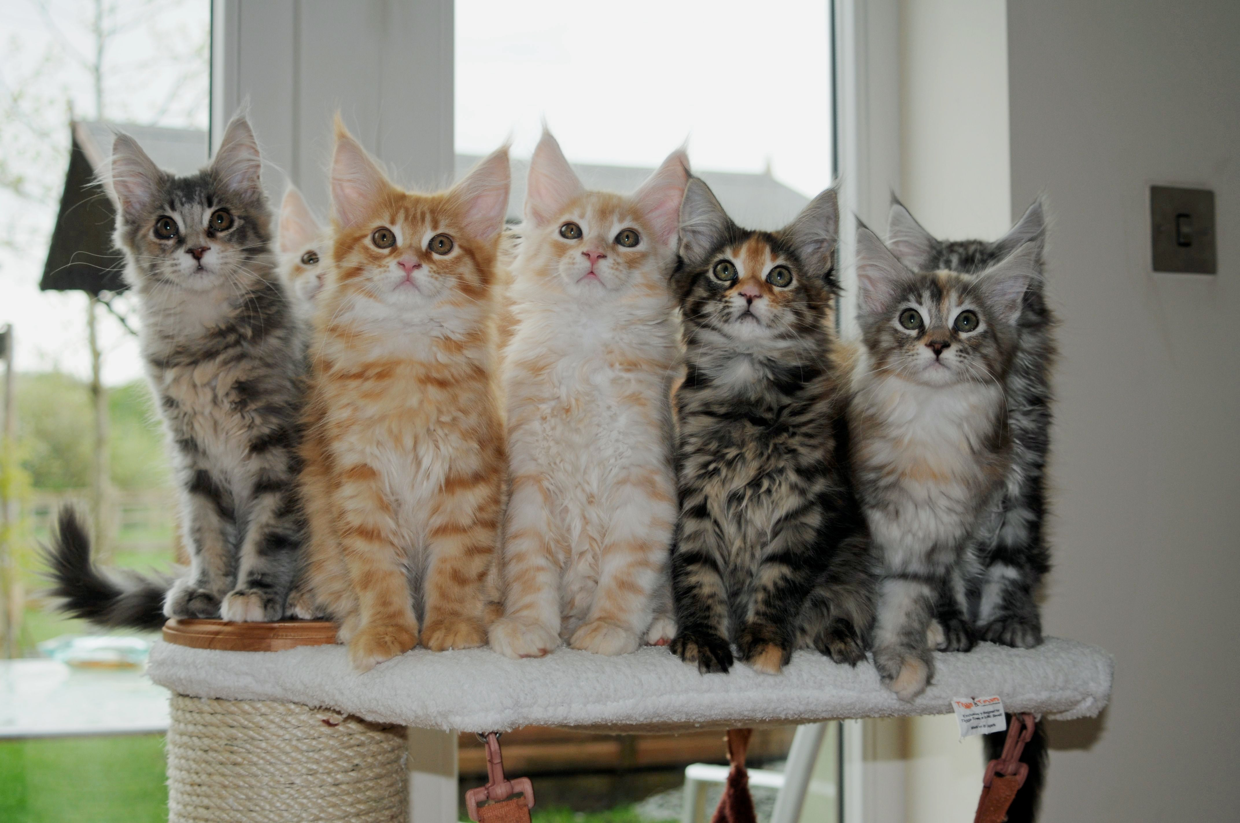Kittens on a Cat Scratching Tower