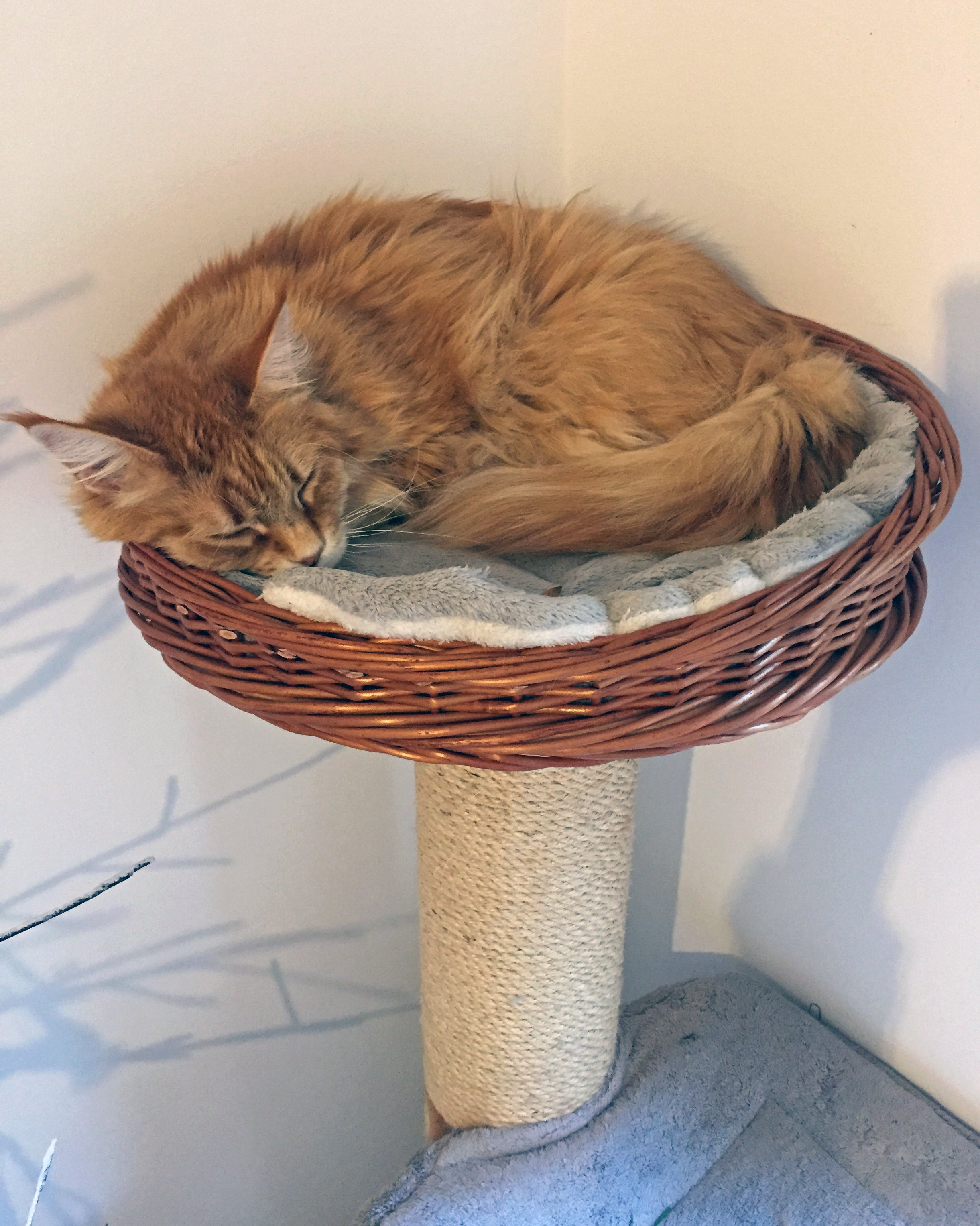 Cat curled up in a Round Wicker Basket