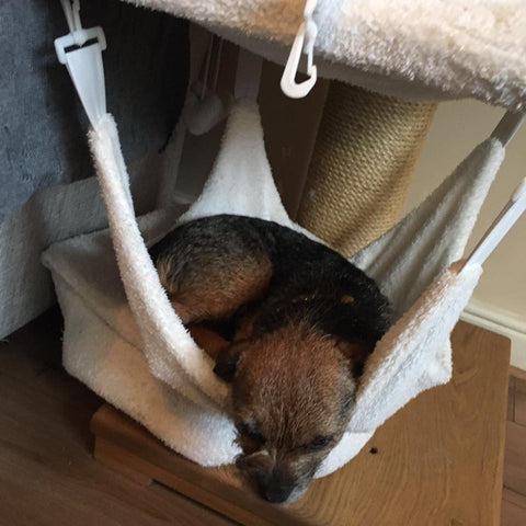 dog bed tigga towers