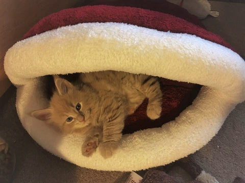 Christmas cat bed - Tigga Towers