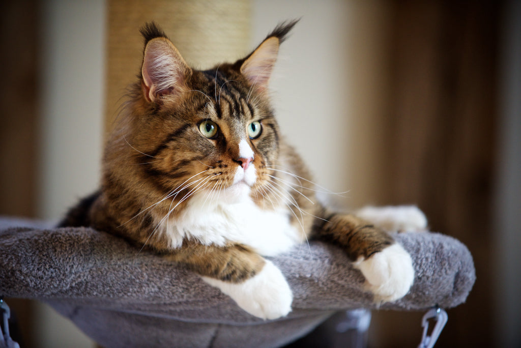 Why Do Cats Scratch And How To Stop Cats From Scratching Furniture