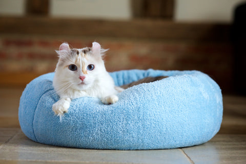 Best cushion Cat bed for curl up sleeping style