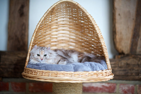 Best flat Cat bed for Stretchy sleeping style