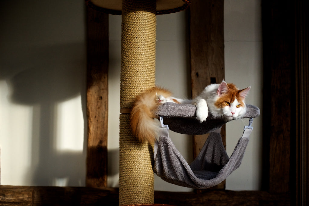 Santos on Maxi Tigga Tower Scratching Post