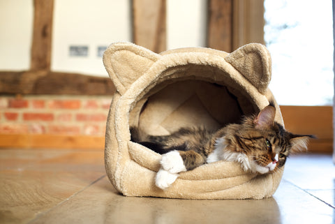 Best covered igloo Cat bed for hide away sleeping style