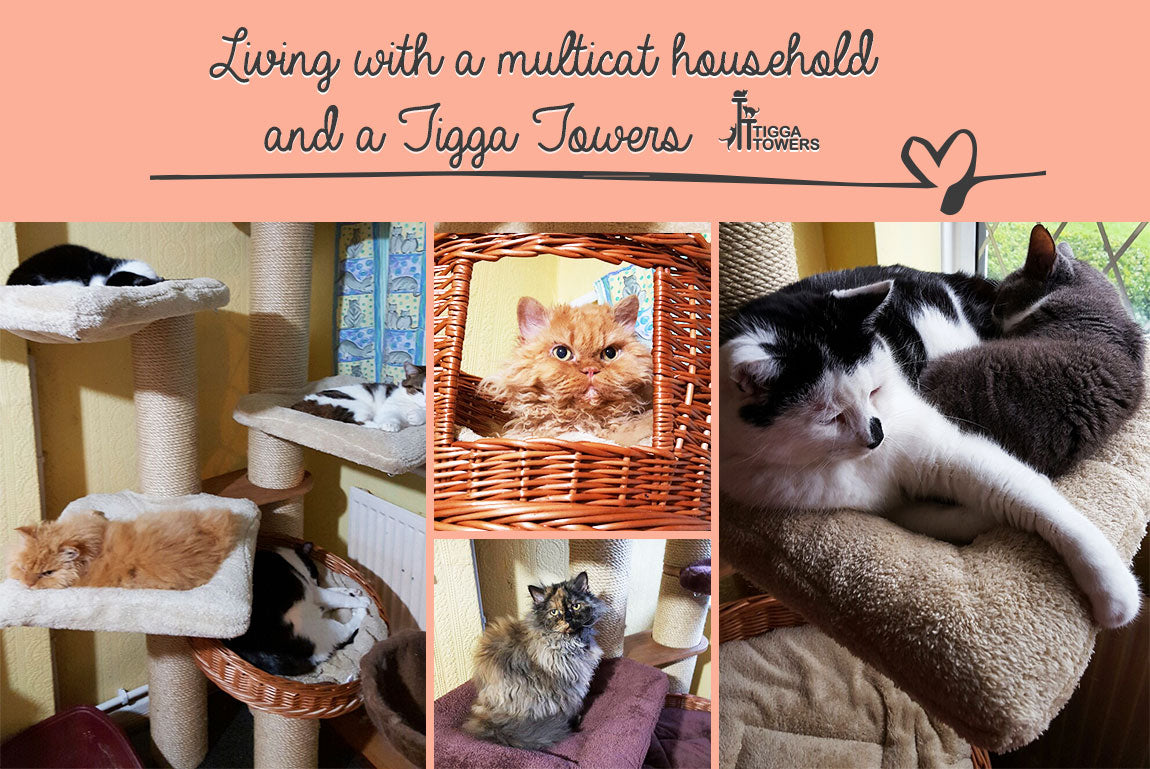 pictures How to Peacefully Feed Cats in MultiCat Households