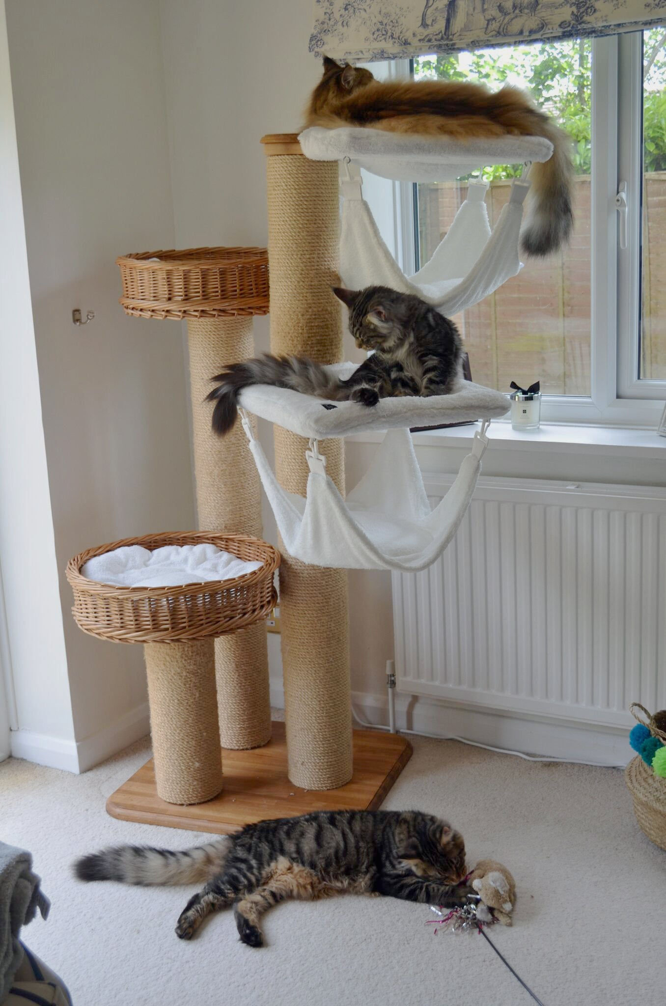 Lettuce, Hamish and Jasper on a Tigga Tower