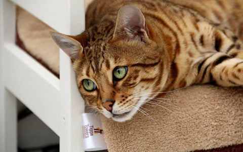 cat products UK - Tigga Towers