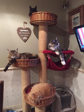 luxury cat tree - Tigga Towers
