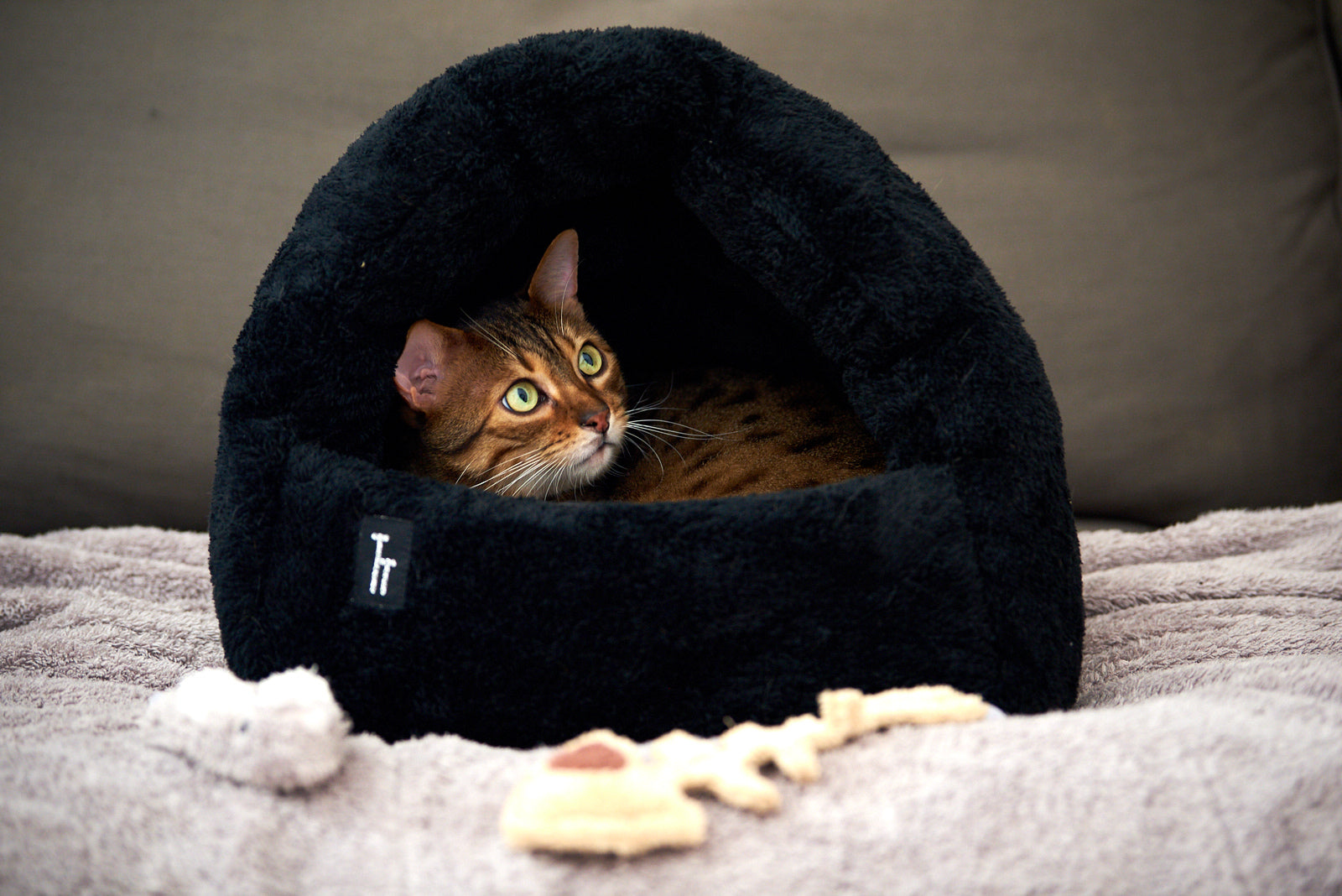 buy Cat Furniture online