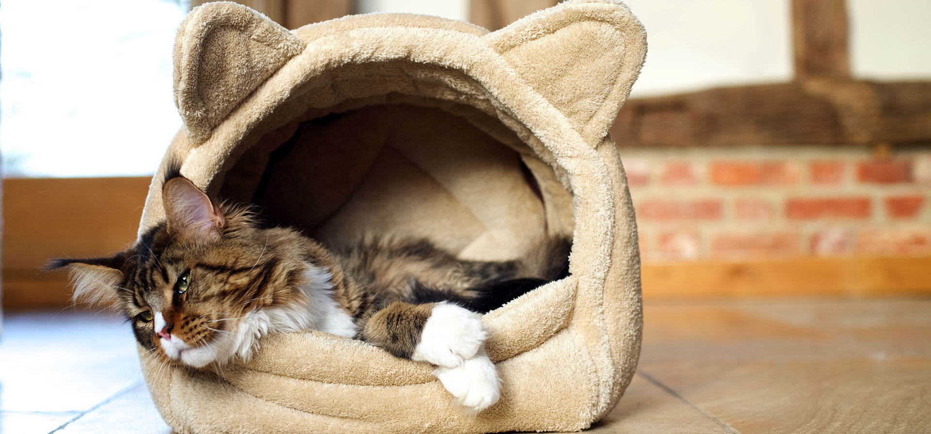 buy Cat Products online