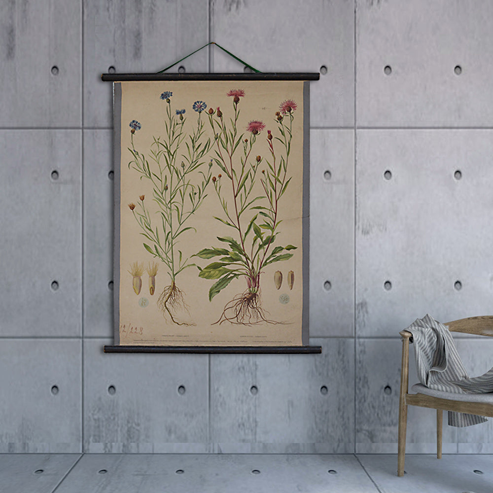 Vintage Old-School Cornflower Botanical Science Poster