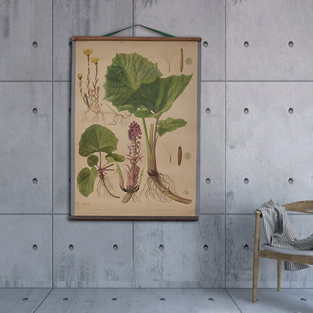 Vintage Old-School Botanical Science Poster with Coltsfoot and Petasites Hybridus