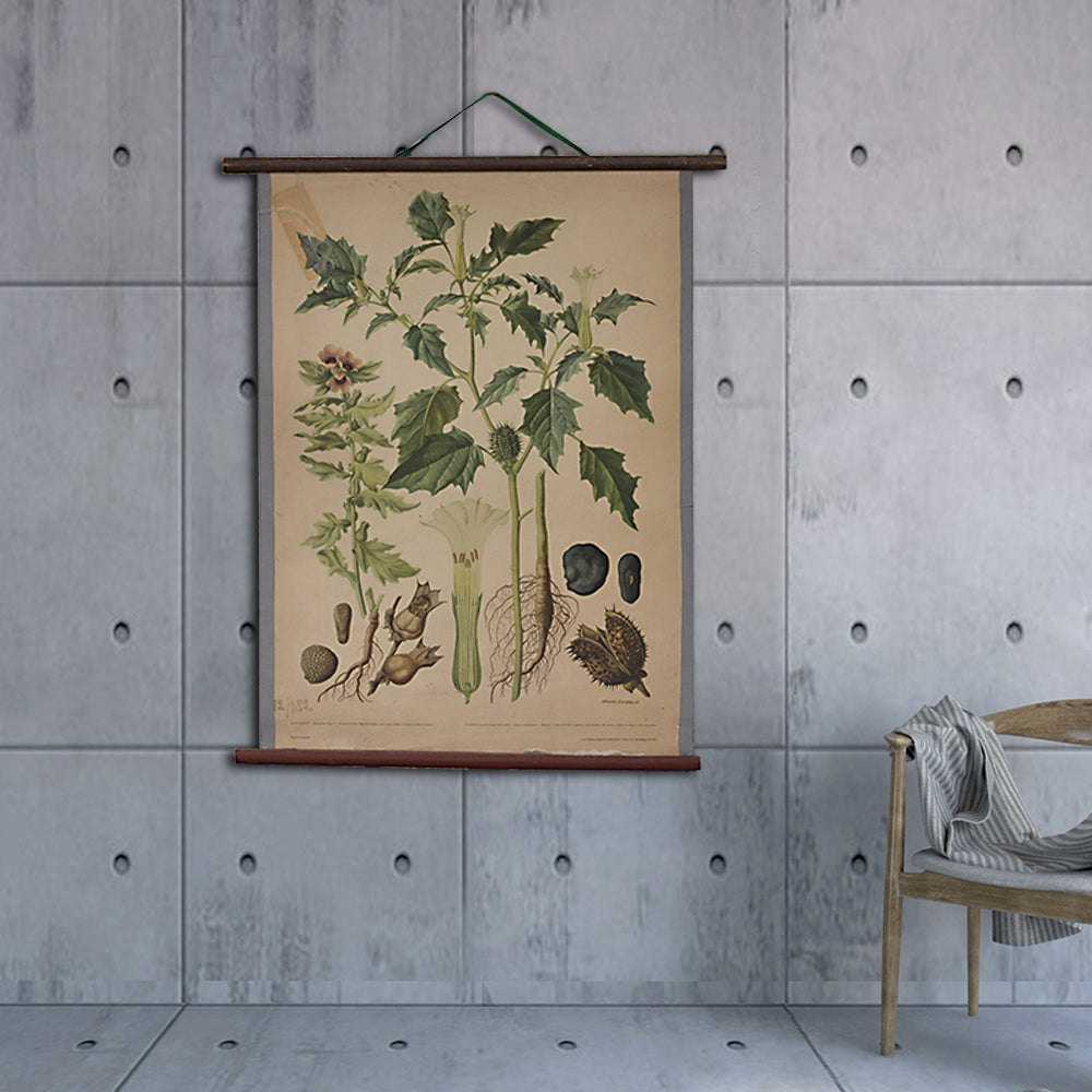 Vintage Old-School Jimsonweed Botanical Science Poster