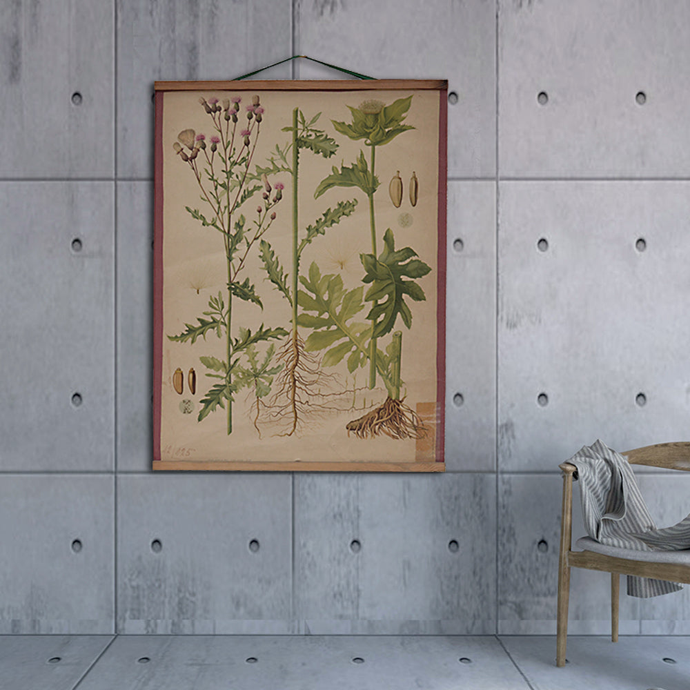 Vintage Old-School Creeping Thistle Botanical Science Poster
