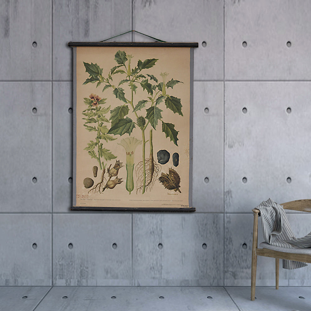 Vintage Old-School Jimsonweed Botanical Science Poster with Black Hanger