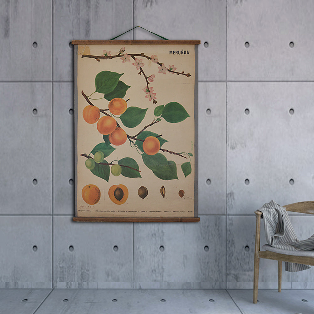 Vintage Old School Armenian Apricot Botanical Science Poster