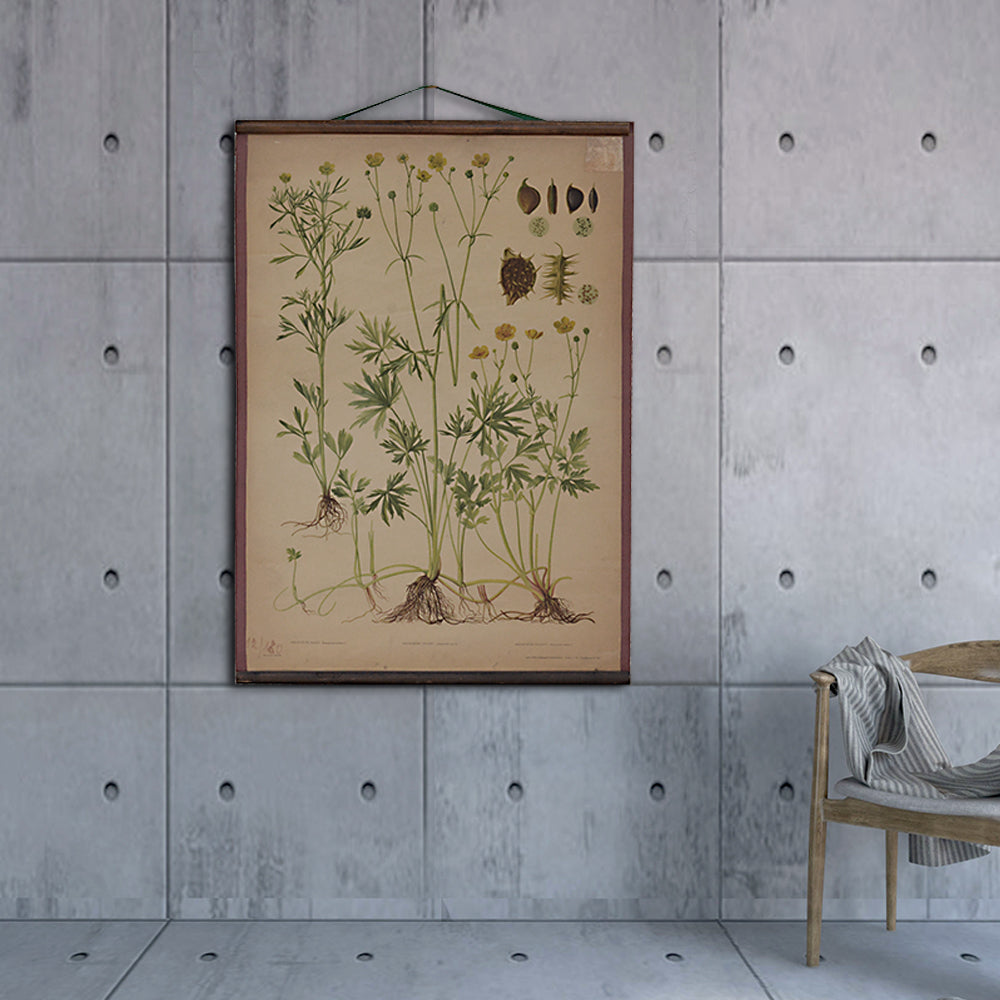 Vintage Old-School Marsh Marigold Botanical Science Poster