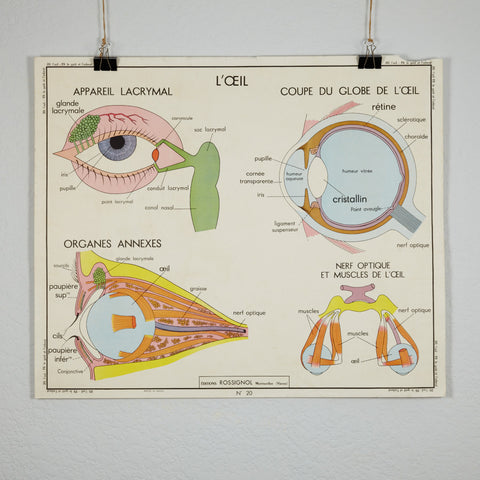 Vintage French School Science Poster- Sight and Taste