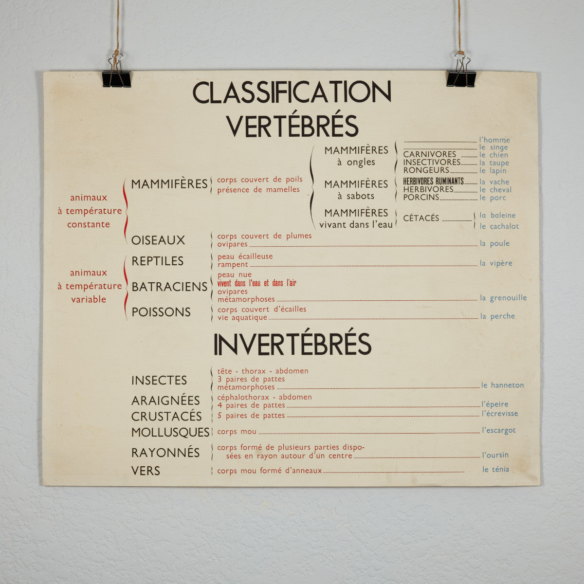 Vintage French School Science Poster- Snail/ Vertebrates- Invertevrates