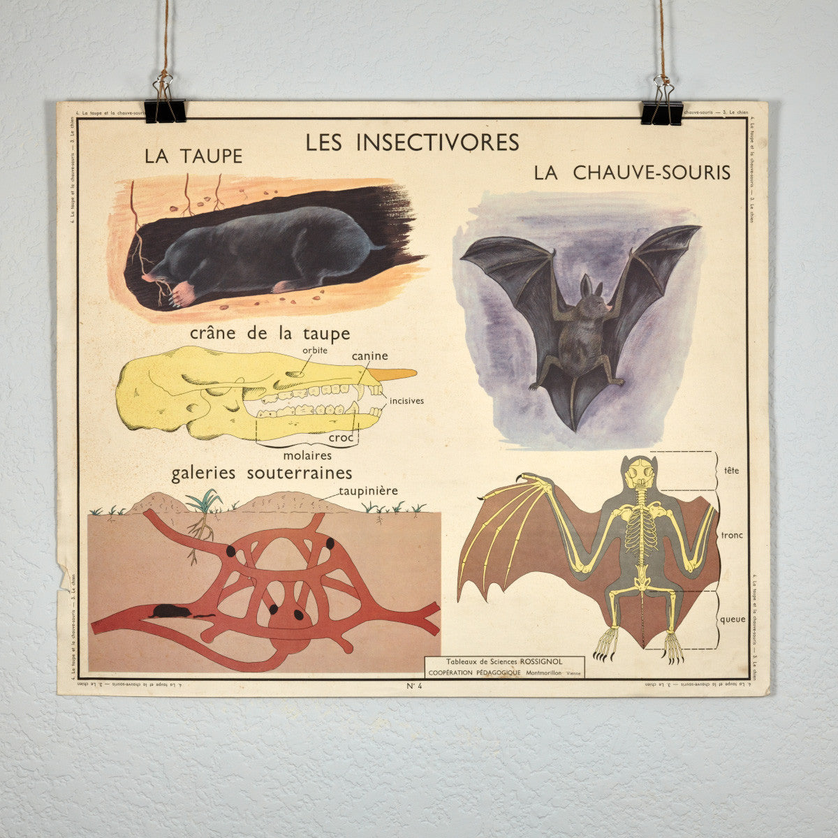 Vintage French School Science Poster- Dog/ Bat