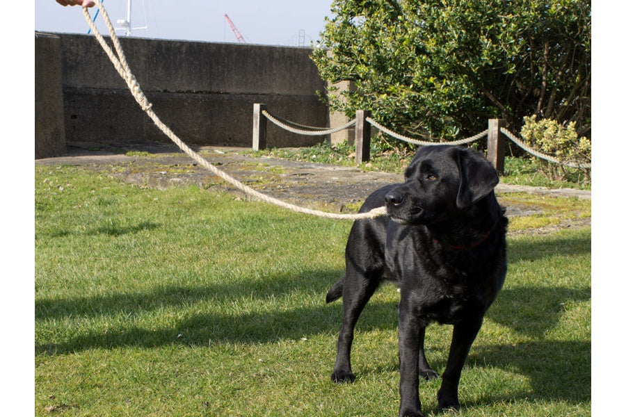 Dog Lead 14mm Rope made in Historic Chatham Boatyard