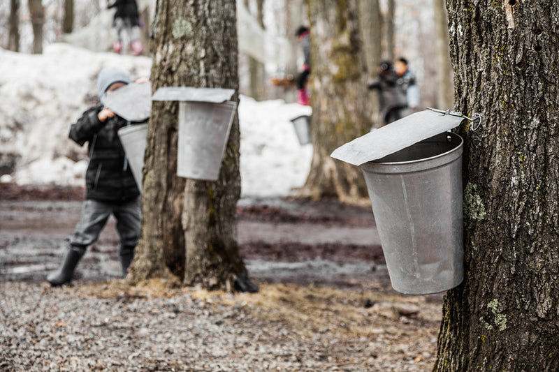 Vintage USA Maple Syrup Collecting Bucket