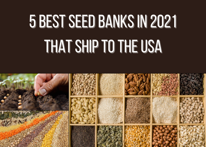 5 Best Seed Banks in 2021 That Ship to the USA