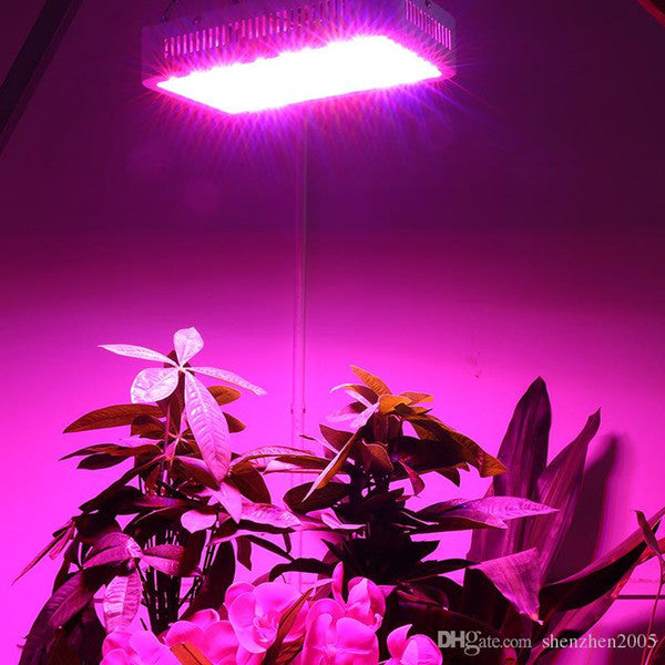 LED Lighting Produces Healthy Plants and Quality Yields
