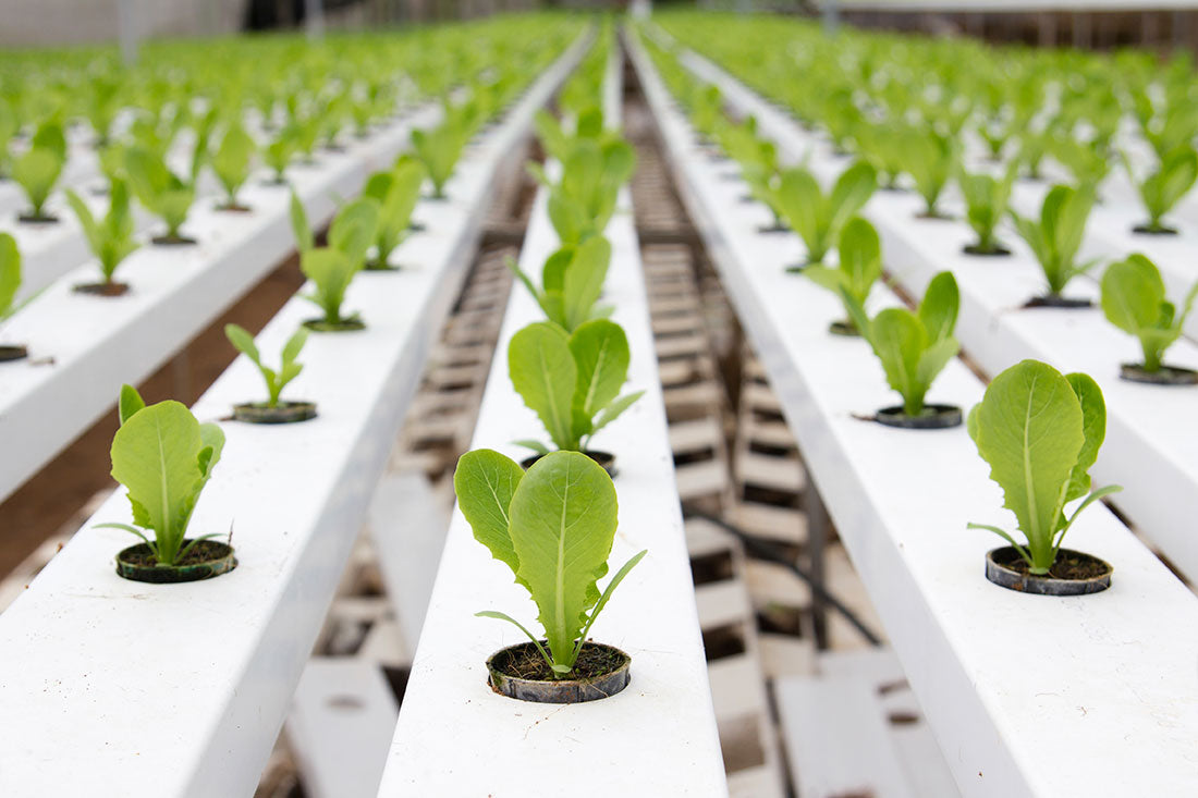 15 Advantages of Hydroponics Vs Soil Farming