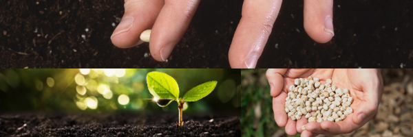 How to tell if your seeds are good or bad quality