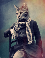 Cat in Scarf