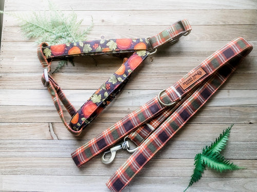 Pumpkin Patch Harness Leash Set