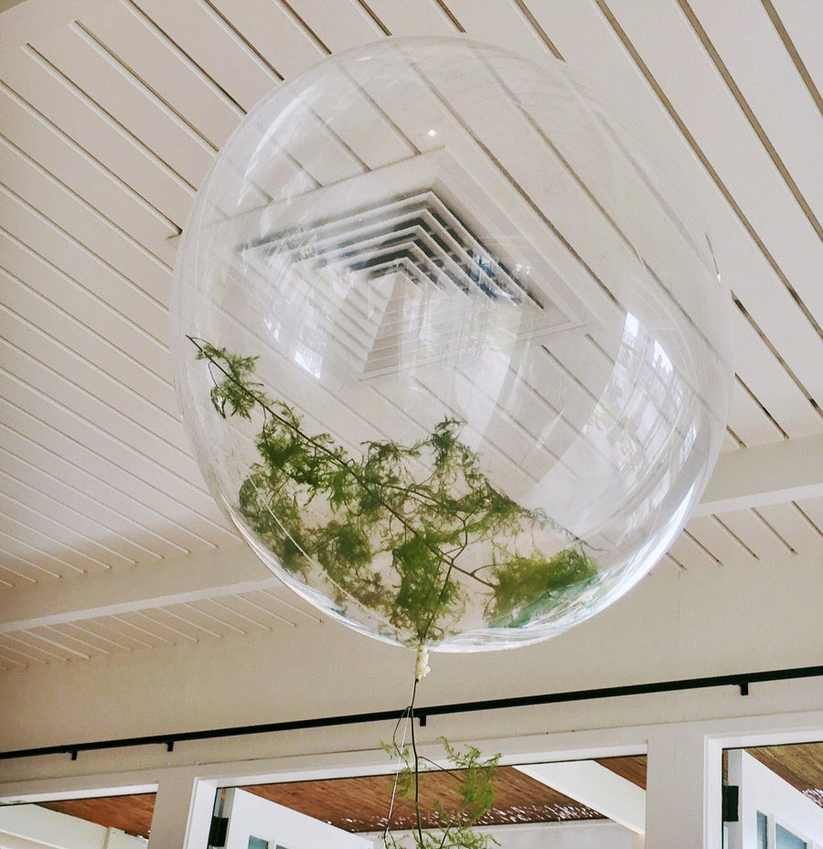 Ferns inside balloons