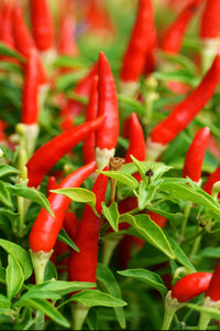Gourmet African Bird Pepper: 2 oz.