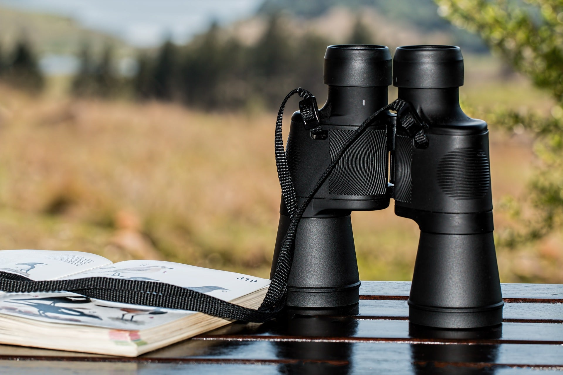 Spy on Your Favorite Bird With the Best Birdwatching Scopes
