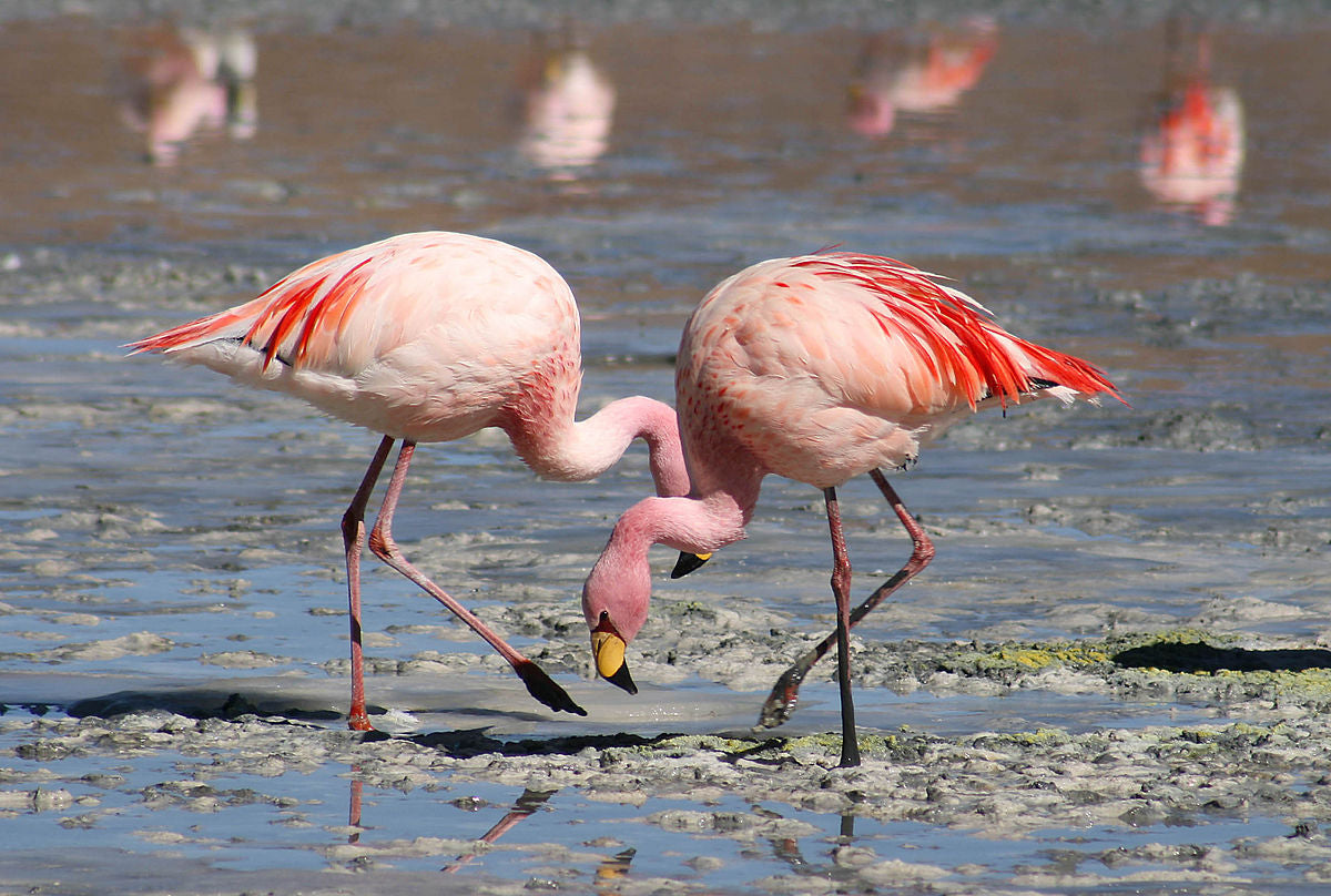 Enter the World of the Flamboyant Flamingo