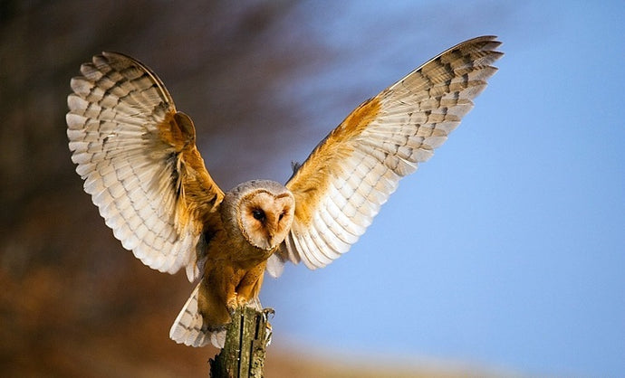 Owls: Amazing Facts that you didn't know!