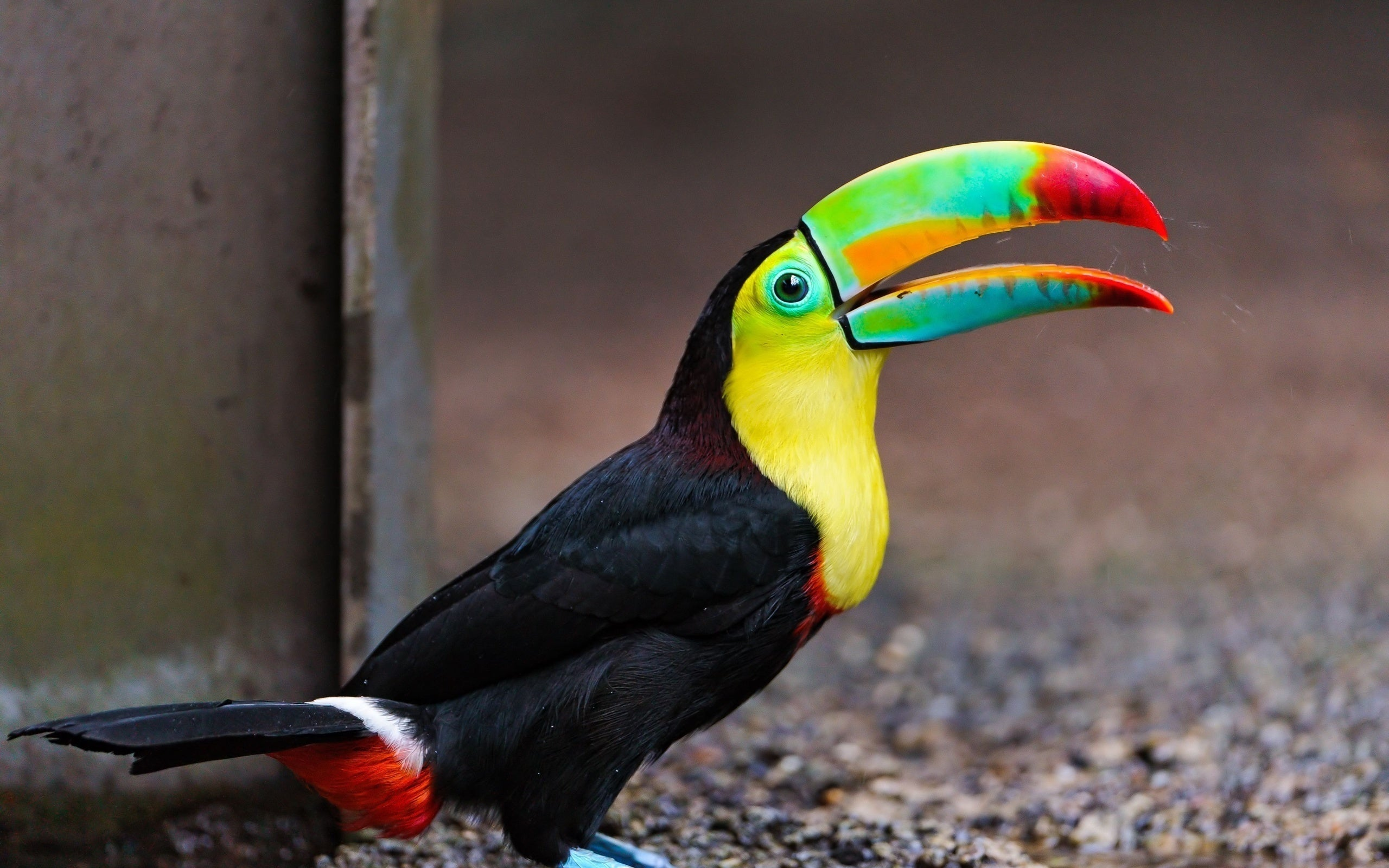 Can You Imagine a World Without the Toucan?
