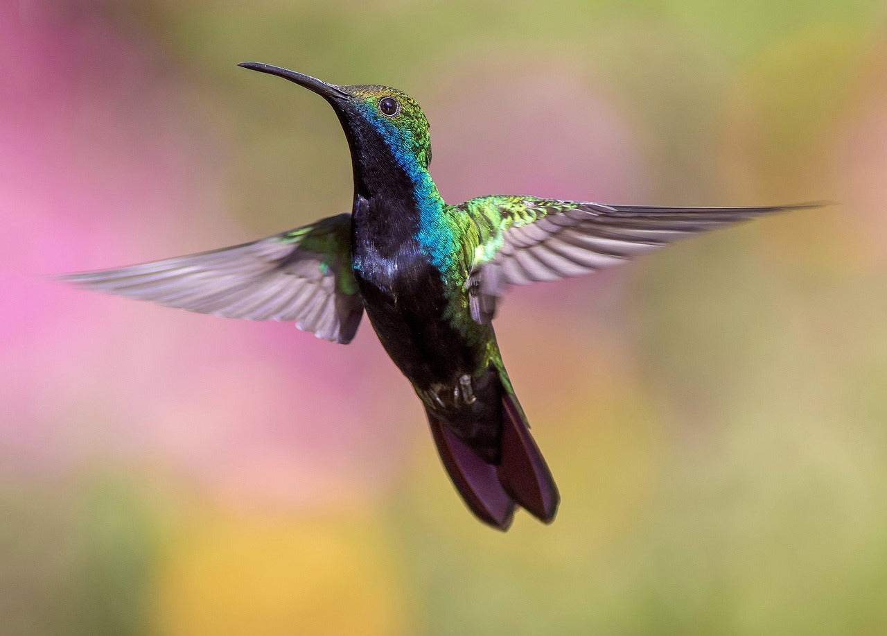 The Fast-Beating Heart of the Hummingbird, and Other Facts You Didn't Know!