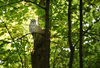 Owl Watching - The Birdtitude Beginners Guide