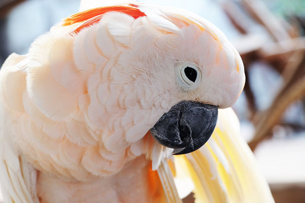 The Personable Parrot, a Conversational Bird