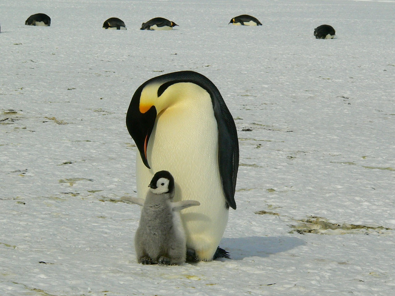 Penguins: 6 Interesting Facts