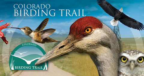 Bird Watching Trails, Birdtitude, Bird