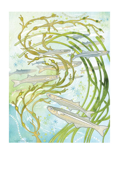 Atlantic Silversides Card