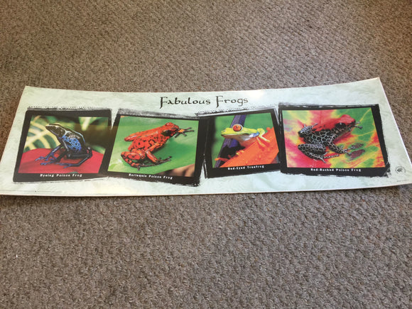 8144 - A - Fabulous Frogs - Lithograph