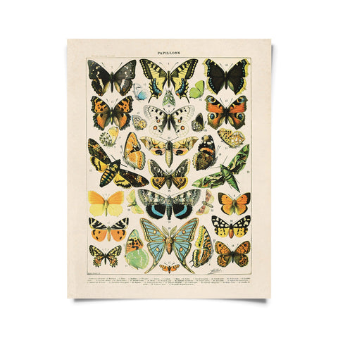 Vintage French Butterfly Print (8x10)