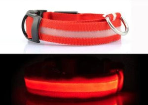 collier lumineux securite chien