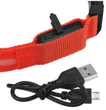 Collier chien lumineux USB rechargeable